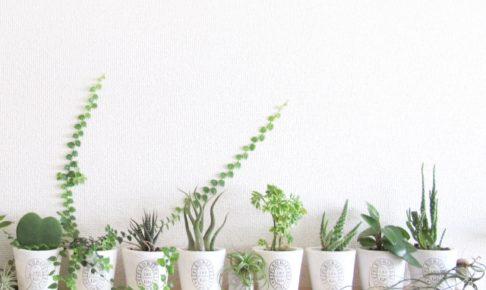 トイレに観葉植物を置く