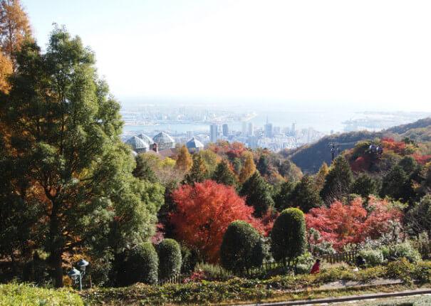 神戸布引ハーブ園の紅葉