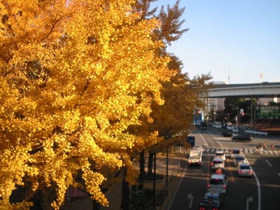 山下公園の紅葉