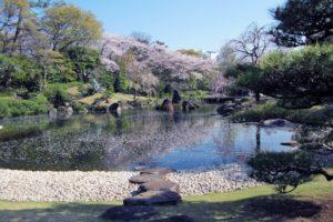 駿府城公園 桜