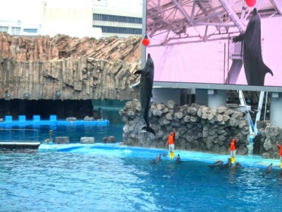 名古屋港水族館 割引